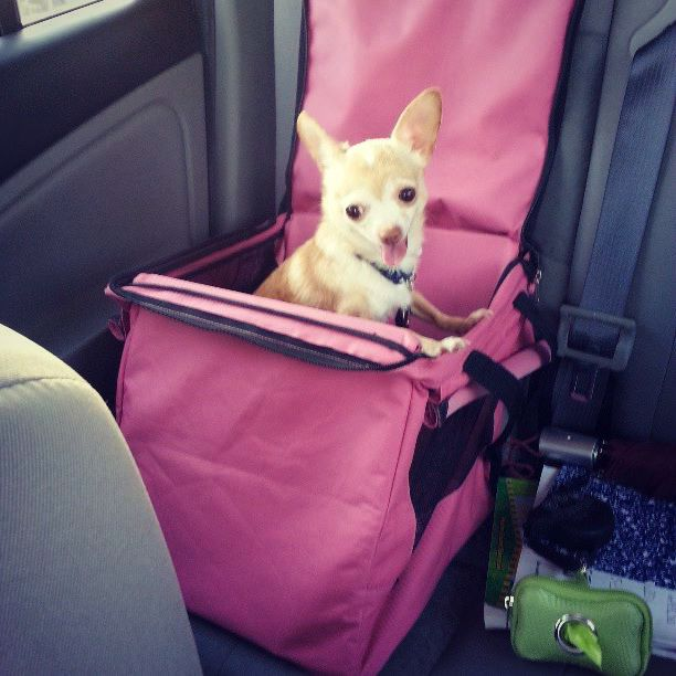 Packing for Pets B in Car Seat